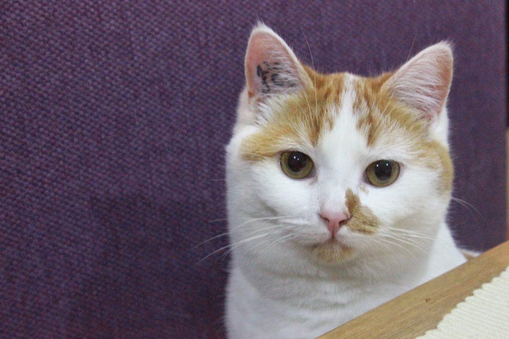 chat tête concernée