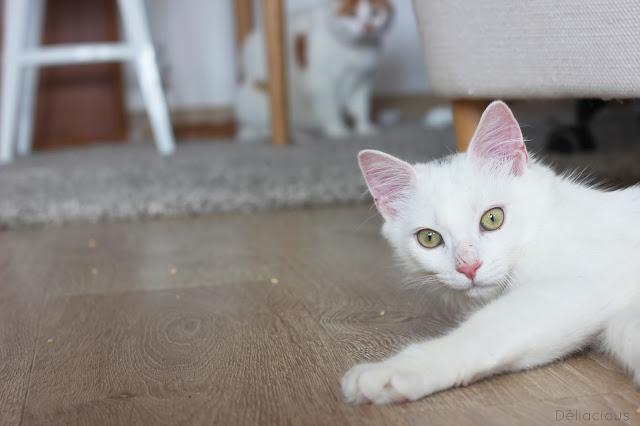 jeune chat adopté en association