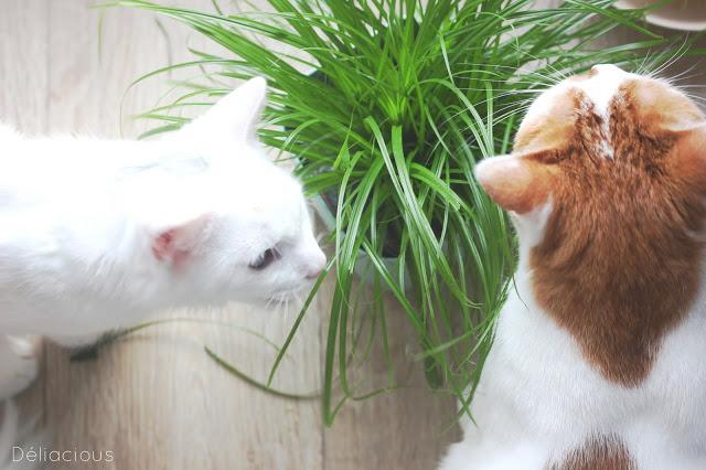 adoption de deux chats