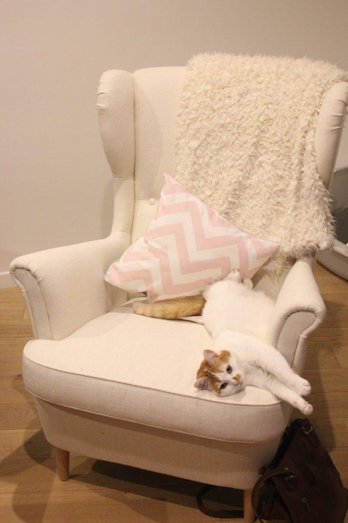 fauteuil strandmon avec un chat