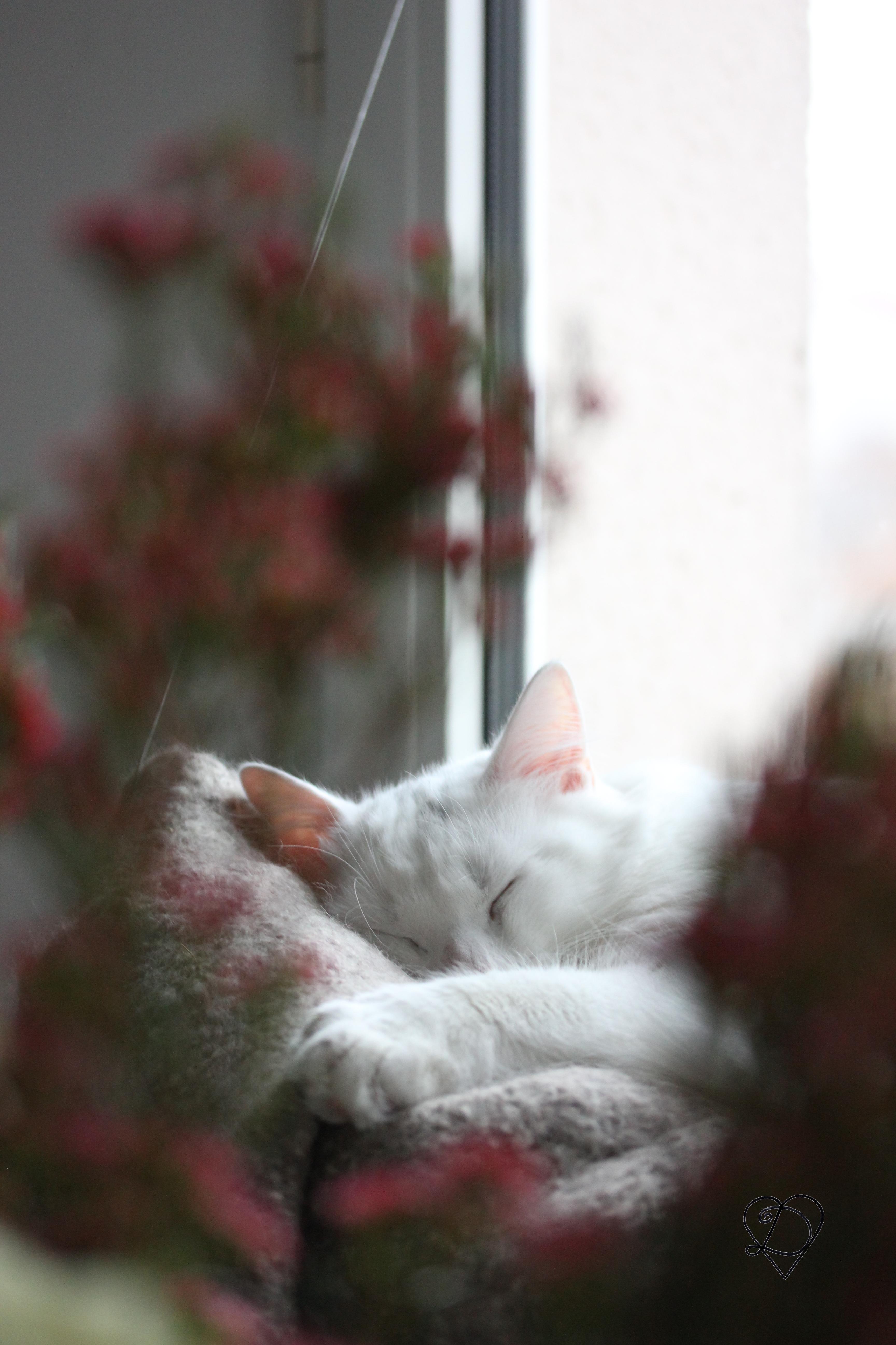 Eviter les bagarres entre deux chats