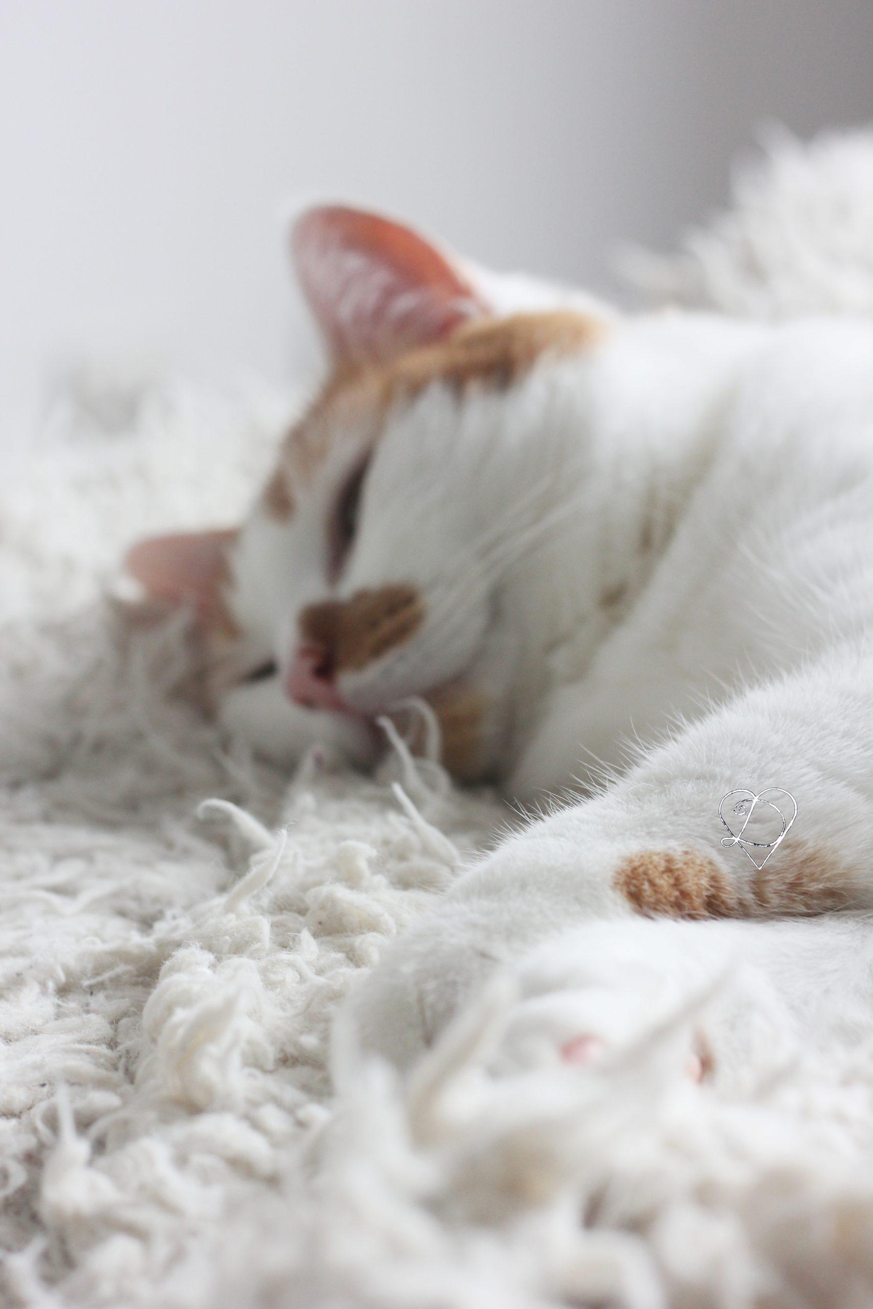 Intégrer un nouveau chat dans une maison
