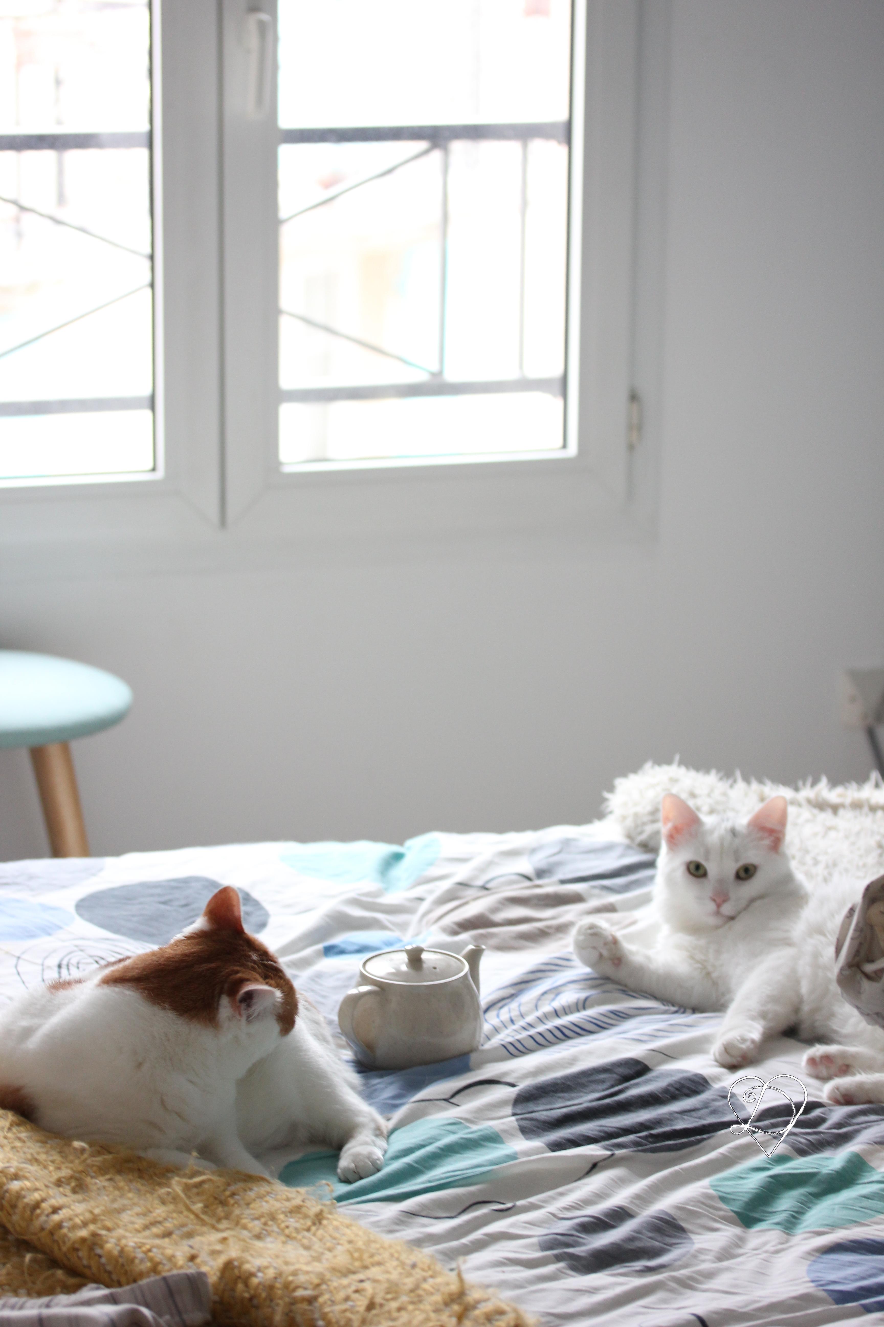 Cohabitation avec un nouveau chat